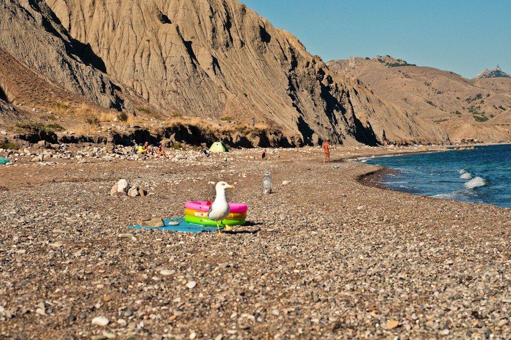 Пляж лисья бухта курортное